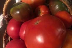 Праздник урожая в нашем Центре! Экологический проект: «Город - сад»! 31.08.2019